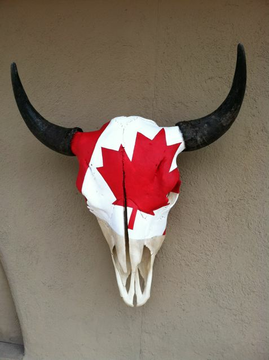 White buffalo skull with red maple leaf reminiscent of Canadian flag. Horns unadorned.